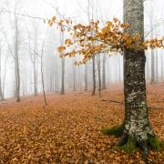 Brouillard automnal, région lausannoise