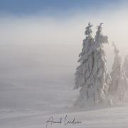 Neige, givre et brouillard au Creux-du-Van