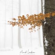 Forêt sous la neige, région lausannoise