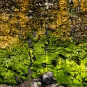 Algues sur la partie inférieur de la falaise