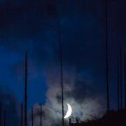 Lune et arbres morts