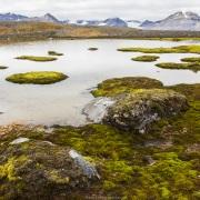 paysage de toundra