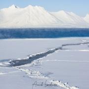 Banquise en fond de fjord