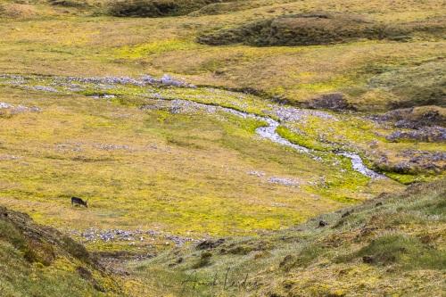 Paysage de toundra et renne du Svalbard