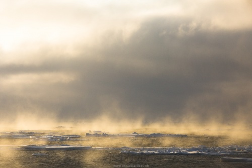 Banquise dérivante et brume de mer: 79°56 Nord
