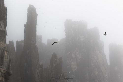 Falaises dans le brouillard