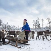Dans le parc aux rennes