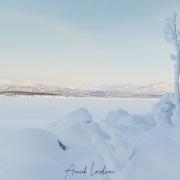 Arbuste solitaire au bord du lac gelé