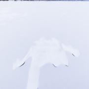 """Lac gelé: """"'index tendu"""""""