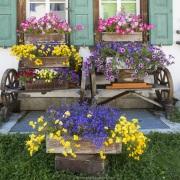 Grisons: Maison fleurie à Sils-Maria