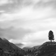 Grisons: Un arbre sur la colline